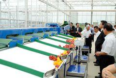 工場内にはパプリカをサイズごとに分ける選果ラインを備える=美浦村土浦