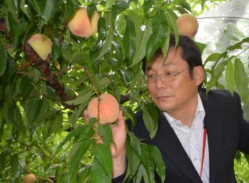 農研機構が育成したモモの新品種「さくひめ」=つくば市藤本