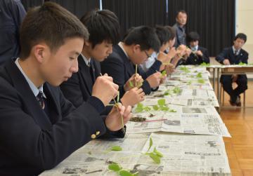 メロン苗の接ぎ木を学ぶ生徒たち=鉾田市徳宿の県立鉾田農業高
