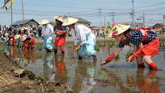 古式ゆかしく稲の苗を植える花笠姿の早乙女ら=笠間市石井