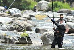 解禁日にアユの友釣りを楽しむ釣り人=大子町下野宮の下野宮橋下流