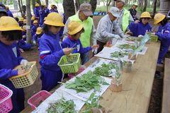指導を受けながら食べられる野草を種類別に分ける児童=筑西市上野
