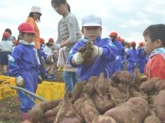 サツマイモ収穫に挑む笠間市立宍戸小の児童=同市平町