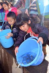 サケの稚魚をバケツから水路に放流する子どもたち=筑西市女方