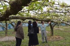 梨栽培の様子を視察するマレーシアの小売り業者と輸入商社のバイヤー(左)=下妻市内