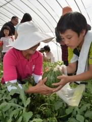 生産者の女性たちの助けを借りながら小玉スイカを収穫する蔵前小の児童たち=筑西市桑山