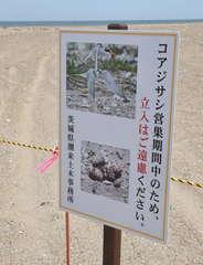 コアジサシの営巣地保護のため設置された立て看板=神栖市日川