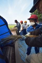脱穀作業を体験する筑西市立関城東小の児童たち=筑西市木戸