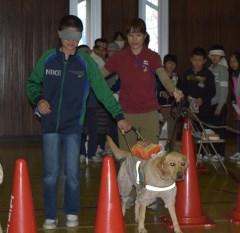 盲導犬と歩行体験する児童=筑西市立上野小