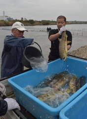 鬼怒川を遡上するサケを捕獲する鬼怒小貝漁協の組合員=筑西市女方