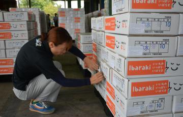 ベトナムに輸出する下妻市産「幸水」の箱にラベルを貼るJA常総ひかりの職員=同市大木