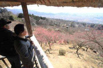 初日から多くの観光客が訪れた筑波山梅まつり=つくば市沼田