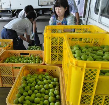 JA水戸西部営農資材センターに次々と運び込まれる「ふくゆい」=水戸市飯島町