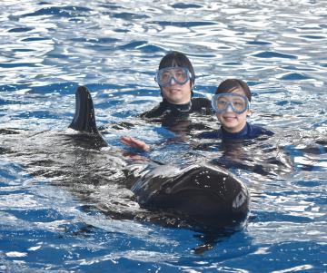 イルカと泳ぐ比氣麻菜美さん(右)と山中誓也さん=大洗町磯浜町