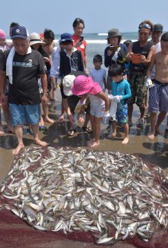 サバやアジなど数百匹の魚が取れた地引き網体験イベント=鉾田市大竹