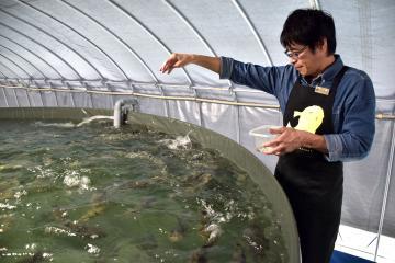 アンコウとフグを味わえるまちにしたいとトラフグの養殖に取り組む武子能久社長=北茨城市平潟町