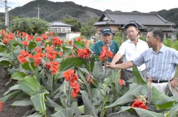 舟生寿会の高齢者たちが前回の茨城国体で植えたカンナの子孫を咲かせ続ける=常陸大宮市舟生