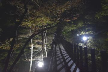 今年初めて紅葉のライトアップが行われる汐見滝吊り橋=高萩市大能