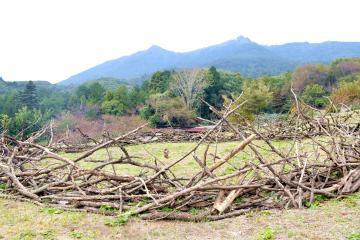 筑波山を背景にしたアグネス・ペーターさんの作品=つくば市臼井