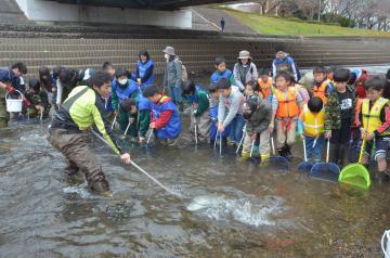 サケの受精卵を探す子どもたち=水戸市中央の桜川