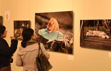 写真展「岩合光昭写真展 ほっこりネコ」の会場に展示された県内撮影の作品=筑西市丙のしもだて美術館