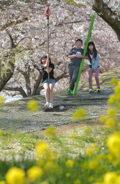 菜の花と桜に囲まれ、遊具で遊ぶ子どもたち=15日午後、下妻市堀篭
