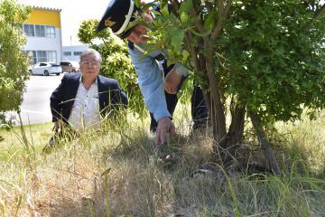カルガモを見守る斎藤〓(日のしたに立)社長と警備員の大島昌司さん=結城市新矢畑