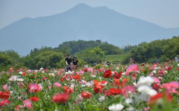ポピーが咲き誇る中、筑波山も望める観光スポットの花畑