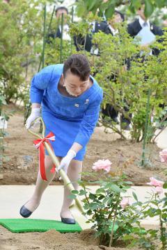 広沢農園でバラを植樹される寛仁親王妃信子さま=筑西市茂田、菊地克仁撮影