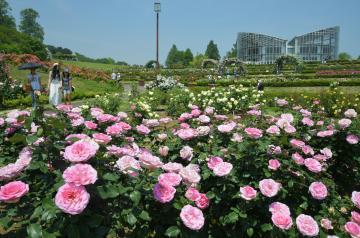 県フラワーパークの園内を彩る色とりどりのバラ=石岡市下青柳