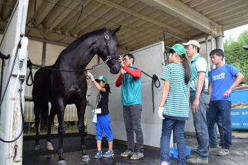 馬のブラッシング体験をする参加者ら=美浦村美駒