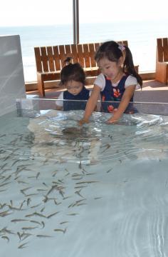 タッチングプールで魚と触れ合う子ども=大洗町磯浜町、清水英彦撮影