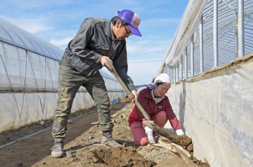 浸水したビニールハウスの補修作業に追われる藤田慎太郎さんと久恵さん(左から)=7日正午ごろ、水戸市飯富町、吉田雅宏撮影