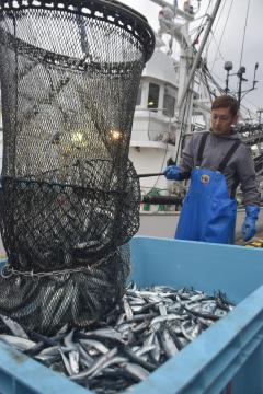 那珂湊漁港に今季初めて水揚げされたサンマ=ひたちなか市和田町