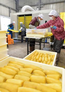干し芋生産会社「テルズ」は、ほぼ全ての製造作業を屋内で行う=東海村白方、鹿嶋栄寿撮影