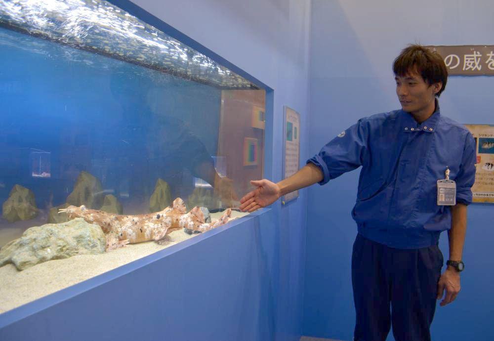 海洋生物の生き残るための戦略を紹介する企画展=大洗町磯浜町