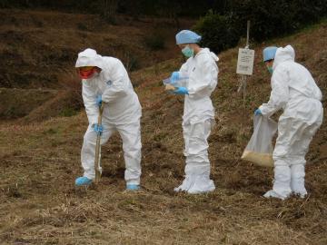 穴を掘り経口ワクチンを入れる猟友会員と県北家畜保健衛生所の職員=23日午前、常陸大宮市舟生