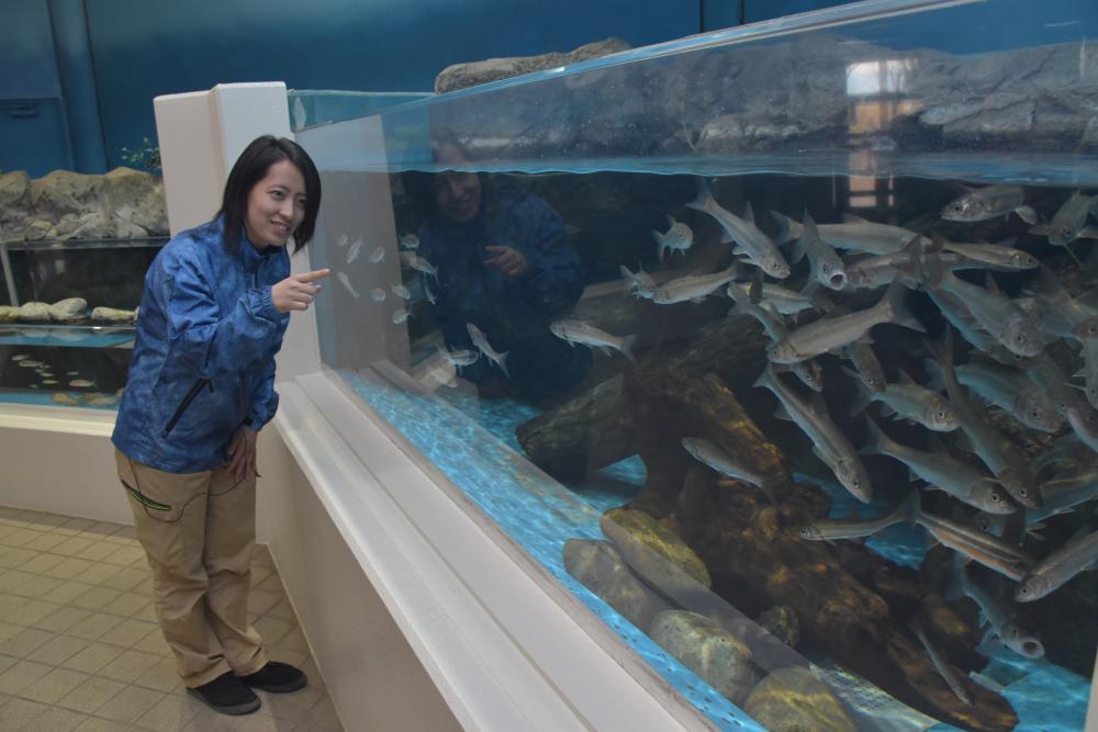 大型の水槽をリニューアルした淡水魚水族館=かすみがうら市坂
