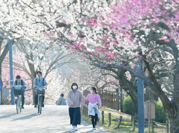 春一番が観測された県内。水戸市の偕楽園公園では、梅林の中を袖をまくったり、薄着で散策したりする人たちの姿が見られた=22日午後3時55分ごろ、同市見川、鹿嶋栄寿撮影