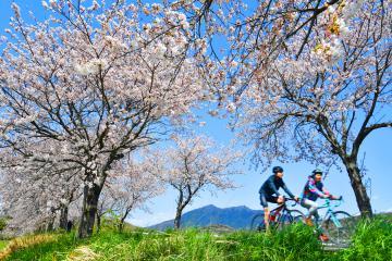 筑波山を望むつくば霞ケ浦りんりんロードの桜並木=2日午後、つくば市北条