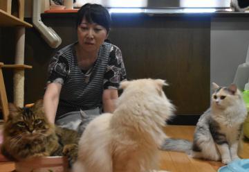 捨て猫の保護活動をしながら猫カフェを経営する山本さおりさん=神栖市大野原