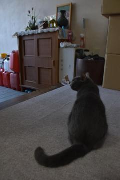 箱根勝美さんの帰りを自宅玄関で待つ猫の「ラム」=石岡市内