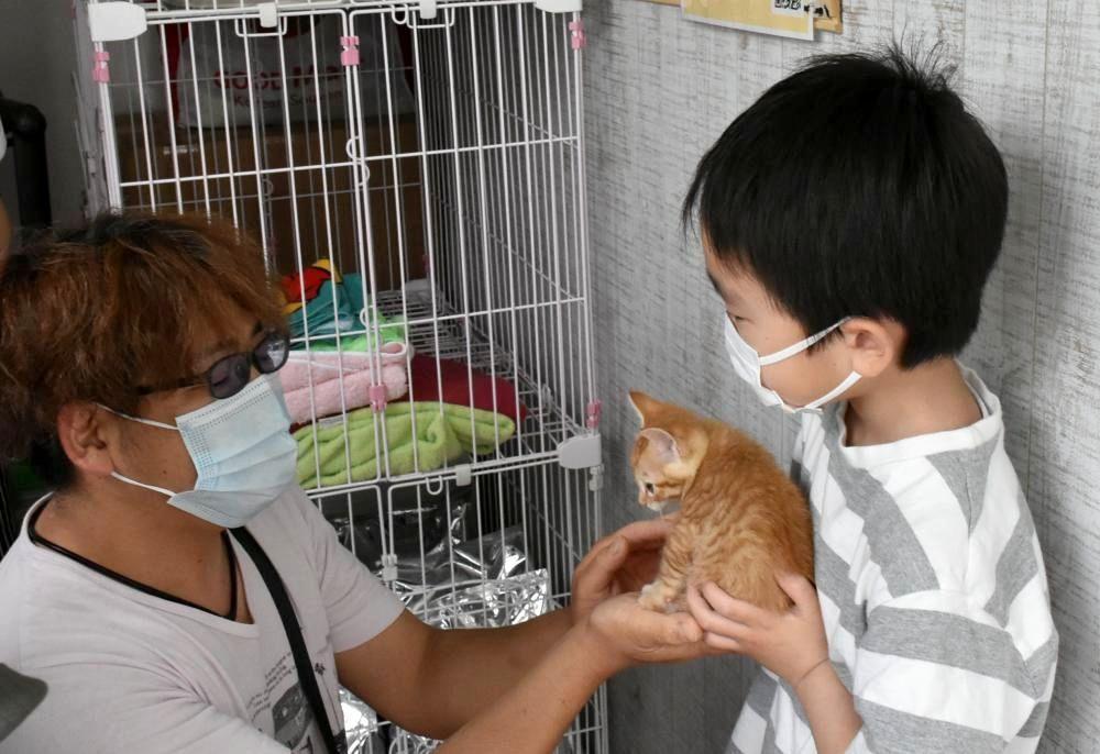 譲渡会で猫を抱く来場者=鹿嶋市武井
