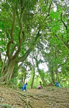 地元のボランティアグループなどが整備の手を入れる鎌倉街道。落ち葉に覆われた土道沿いには巨樹や石造りの社もある=利根町奥山