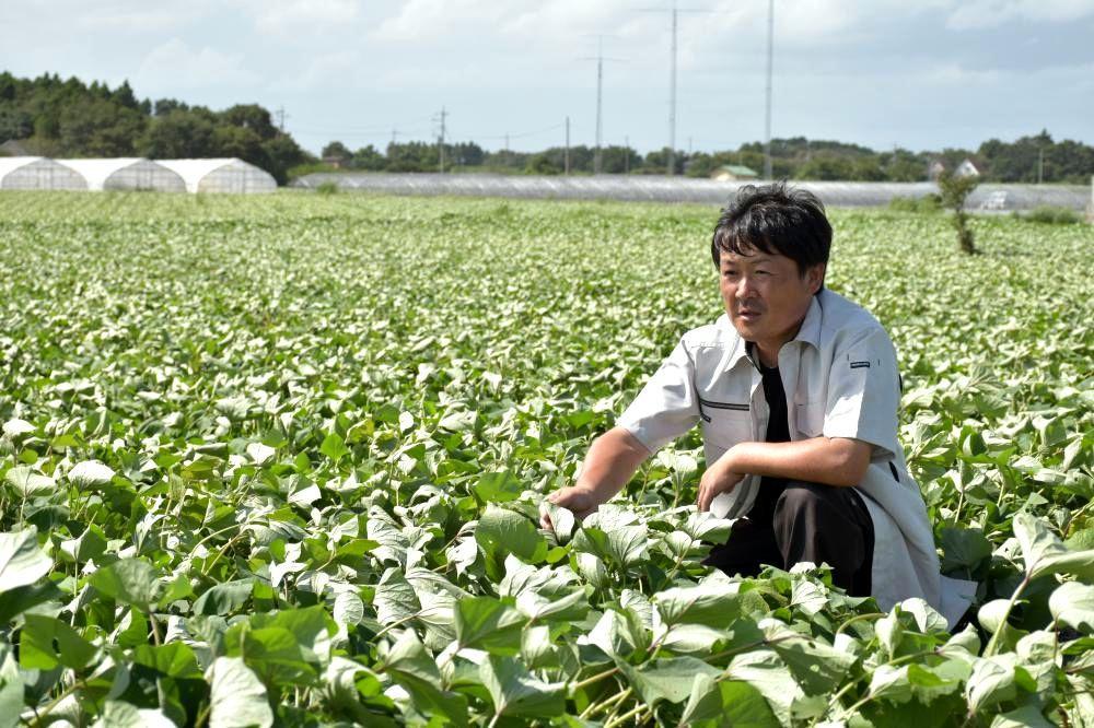 「植物が種で命をつなげるように土作りで農業を次世代につなげていきたい」と語る深作勝己社長=鉾田市台濁沢
