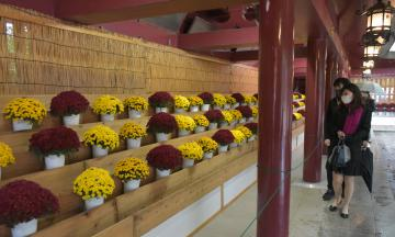 笠間稲荷神社境内の回廊に並ぶ菊の花=笠間市笠間