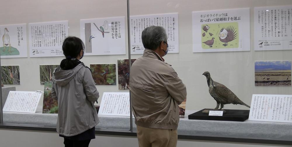 鳥の展示=水戸市大町