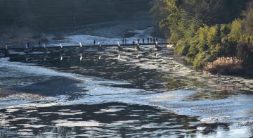 朝日を浴びて輝きながら流れるシガ=大子町久野瀬