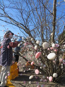 直売所敷地内の樹木の枝に飾り付けされたならせ餅=つくば市柳橋