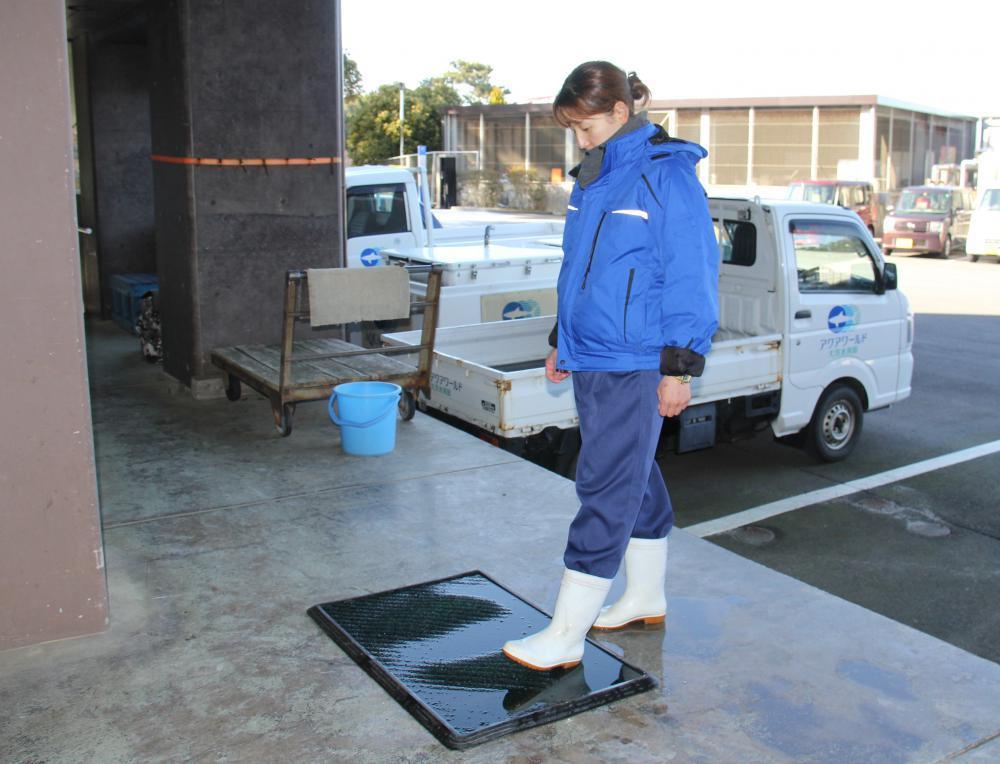 入室前に消毒マットで長靴を消毒する飼育員=大洗町磯浜町の県大洗水族館(同館提供)